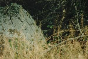 leopard-mfs2