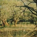 leopard, Zululand