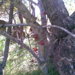 stem fruit