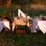 a bush bar whilst on safari